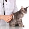 Ветеринарные клиники в Нижней Салде